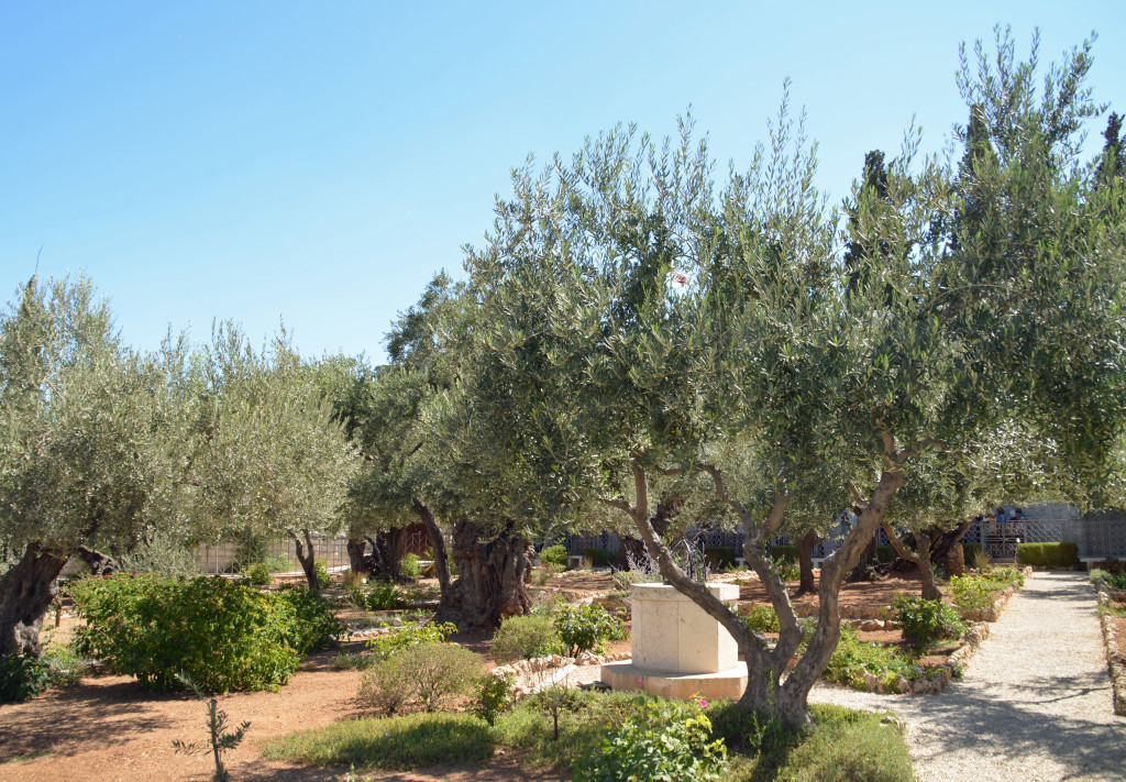 The Garden of Gethsemane - spot where Jesus and his disciples prayed the night before his crucifixion