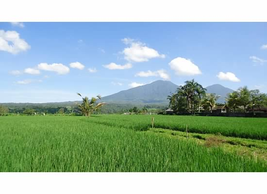 Missing the lush, green countryside of Bali