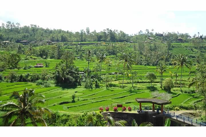 The rice terraces of Jatiluwih